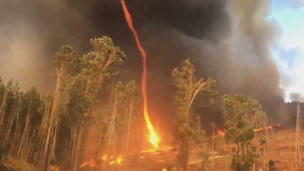 Australia fires: State of Emergency Declared For Canberra Region