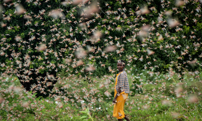 East Africa Is Suffering It's Worst Invasion of Desert Locusts in 25 years